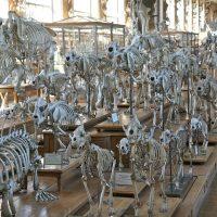 skeleton-388554_1280