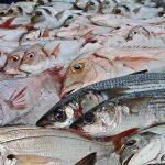 fish-1617442_960_720