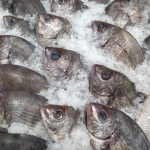fish-727223_960_720