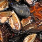 mussels-1177790_960_720